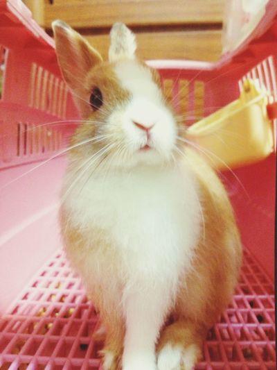 Rabbit Lovely