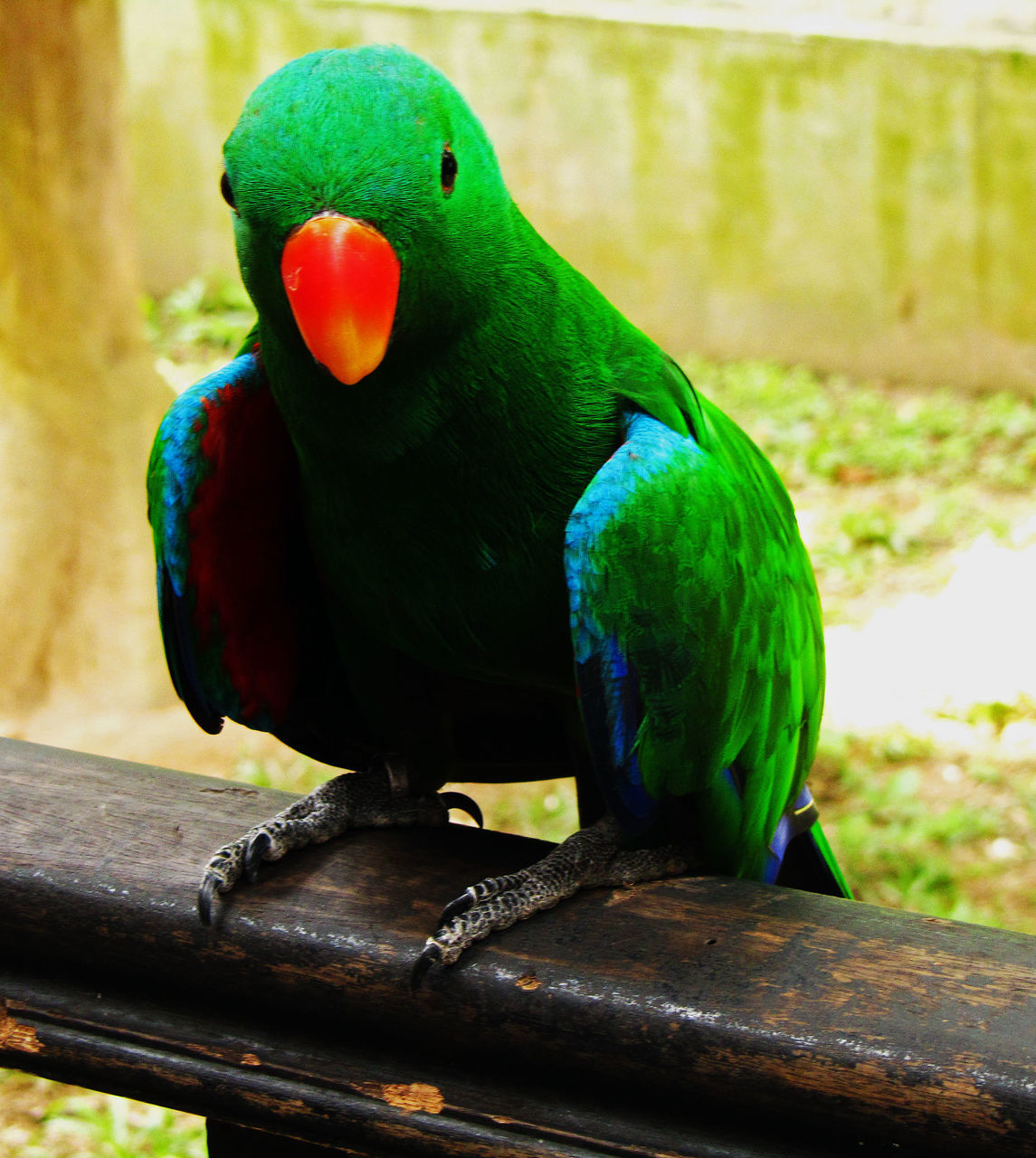 one animal, animals in the wild, animal themes, bird, perching, animal wildlife, focus on foreground, close-up, no people, parrot, green color, nature, beak, outdoors, day, multi colored