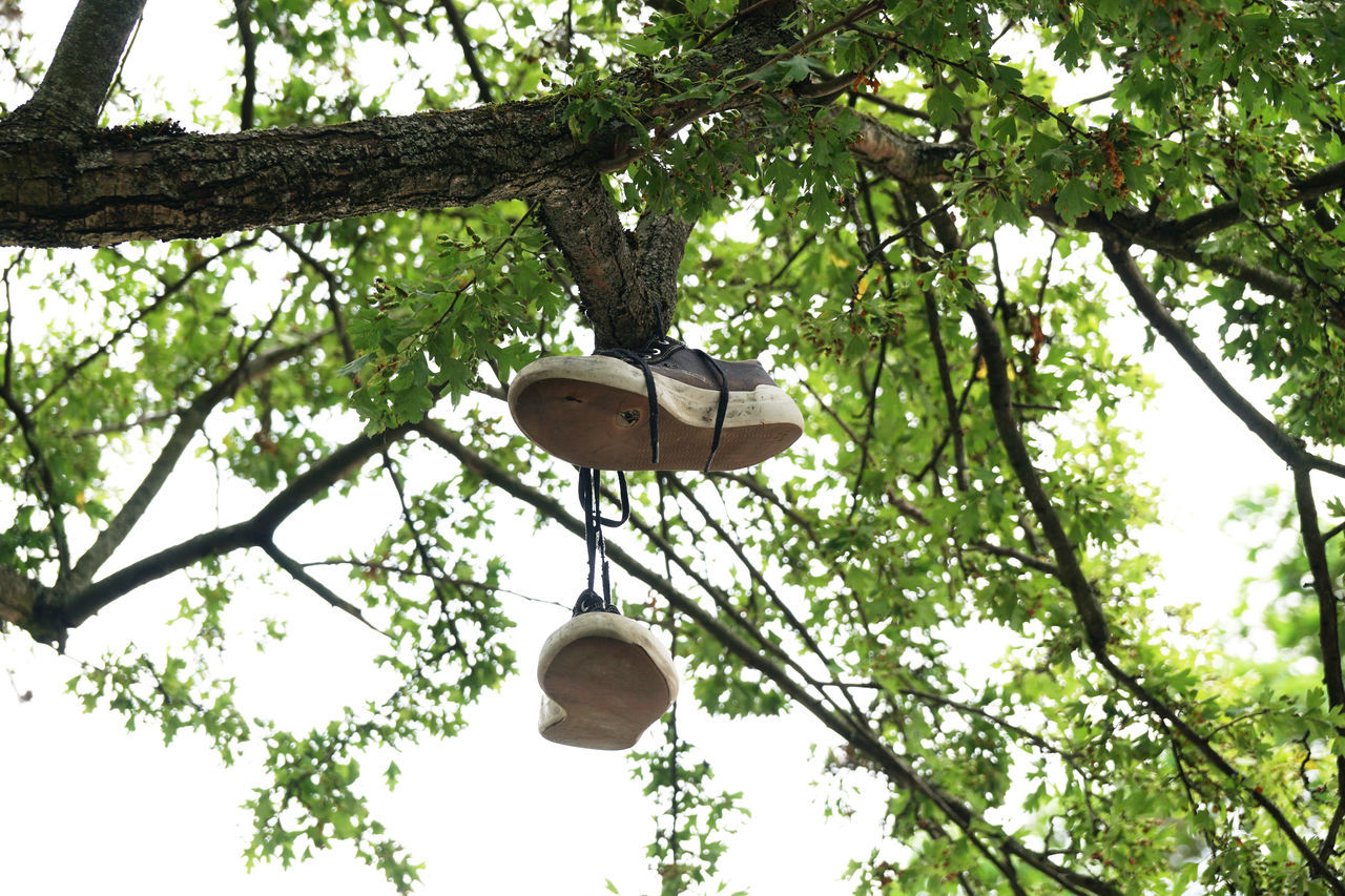 Branch Canvas Shoe Dangling Day Discarded Fun Funny Hanging Low Angle View Nature No People Outdoors Pair Prank Shoes Sneakers Sport Throw Tree