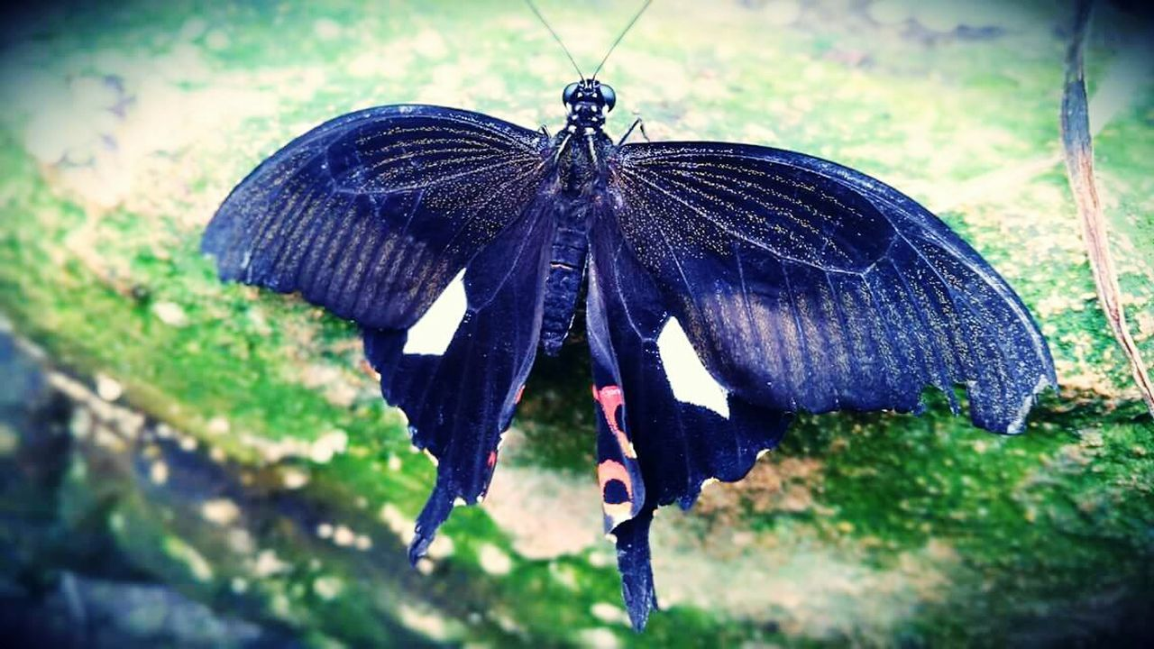 animal themes, insect, one animal, animals in the wild, butterfly - insect, no people, close-up, outdoors, butterfly, animal wildlife, day, full length, nature, perching