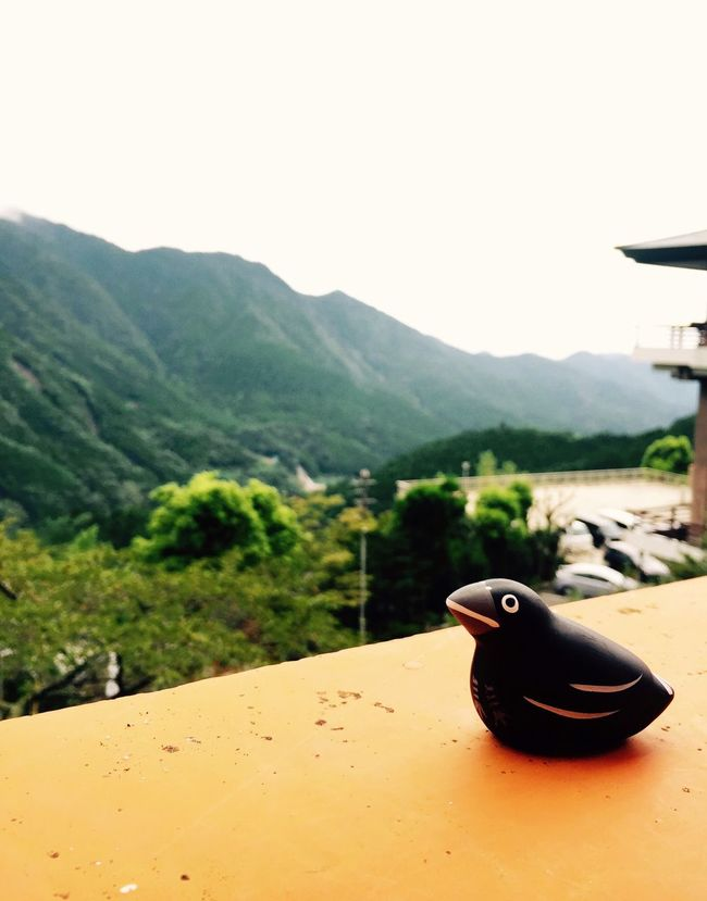 Raven The Great Contemplation Soul Searching Japan