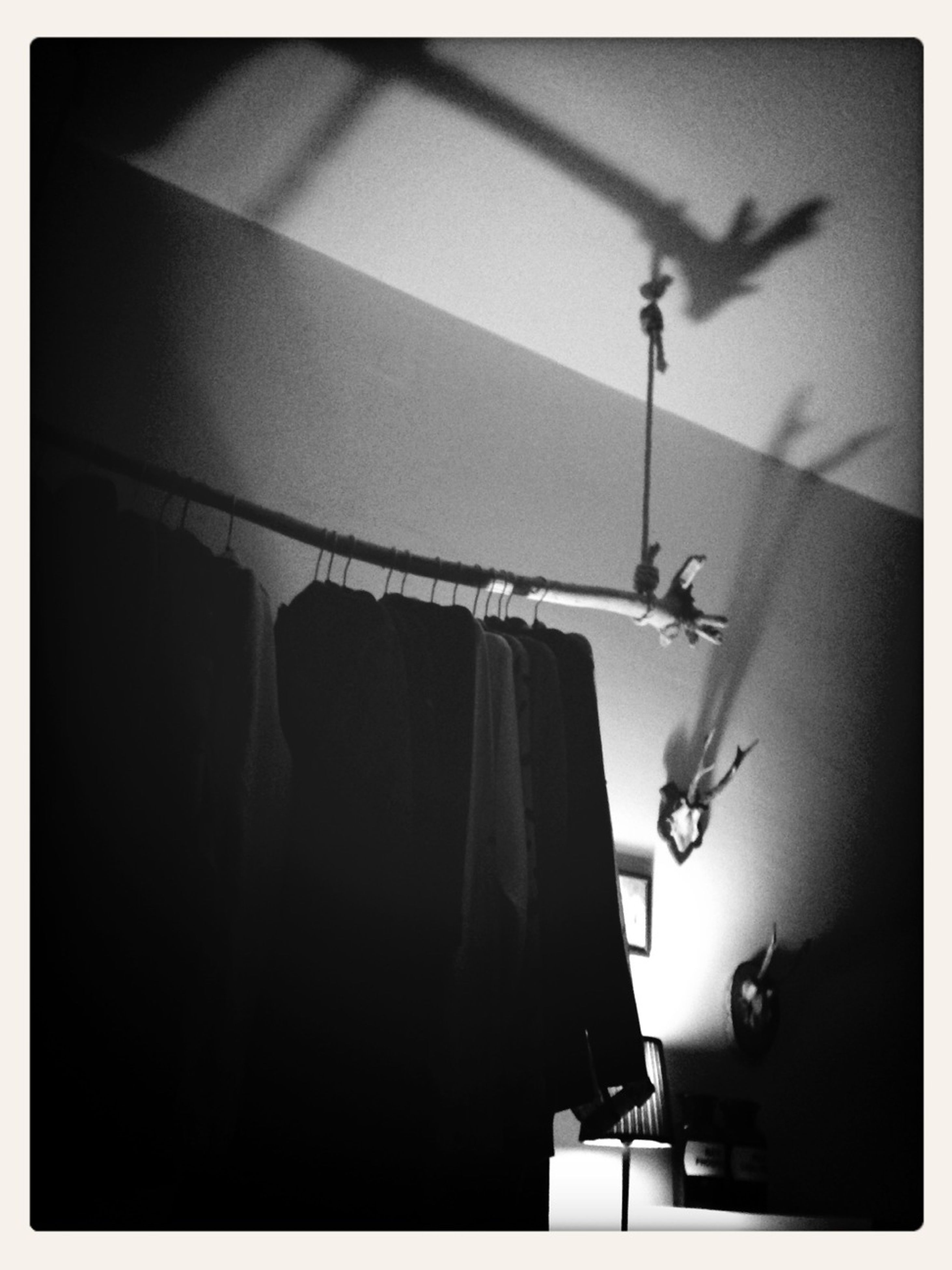 transfer print, auto post production filter, indoors, hanging, lighting equipment, low angle view, electricity, no people, animal themes, illuminated, wildlife, wall - building feature, fuel and power generation, technology, built structure, silhouette, bird, day, flying, animals in the wild