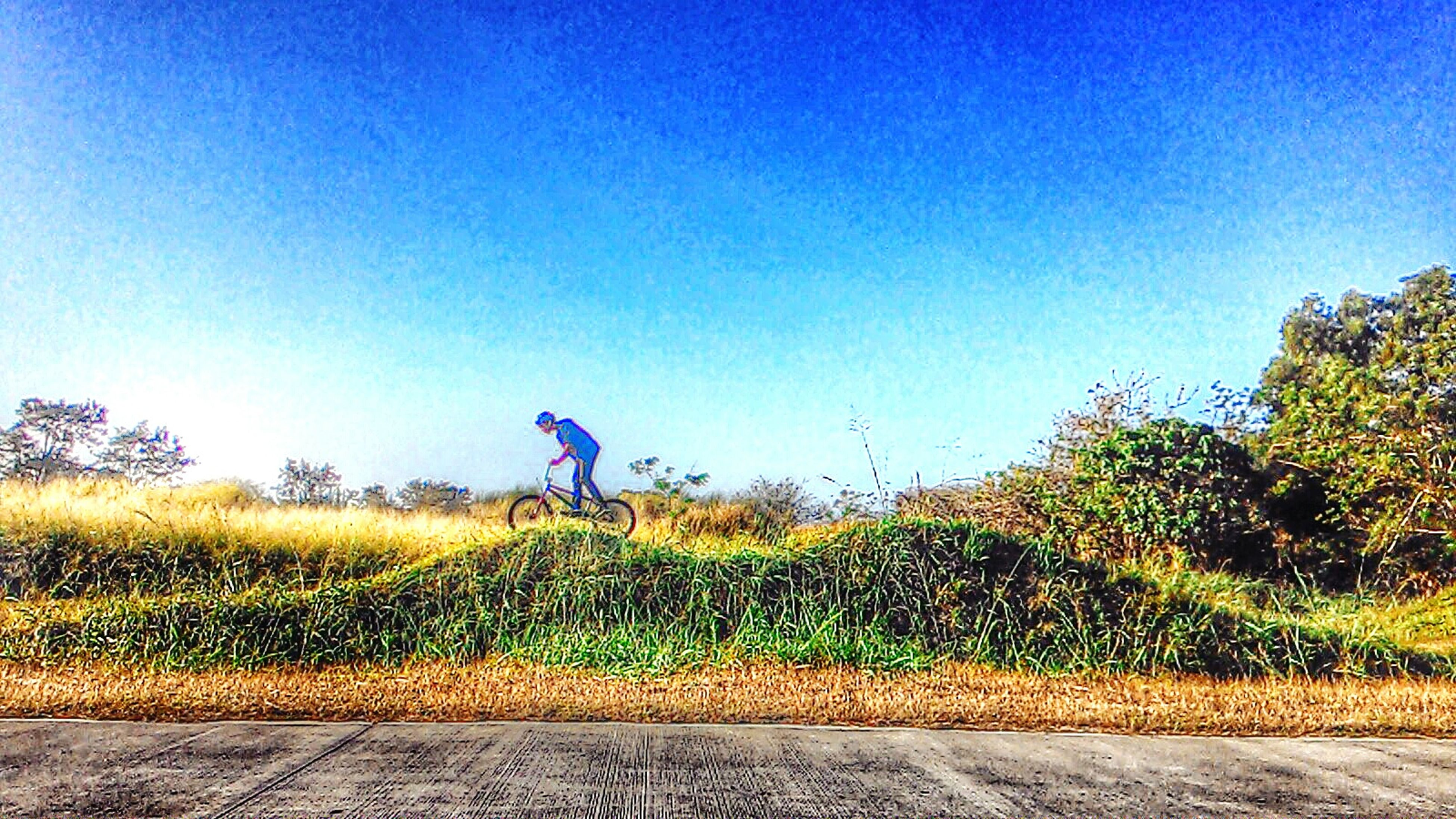clear sky, blue, copy space, field, lifestyles, leisure activity, grass, growth, plant, yellow, men, bicycle, agriculture, landscape, childhood, tree, nature, sunlight