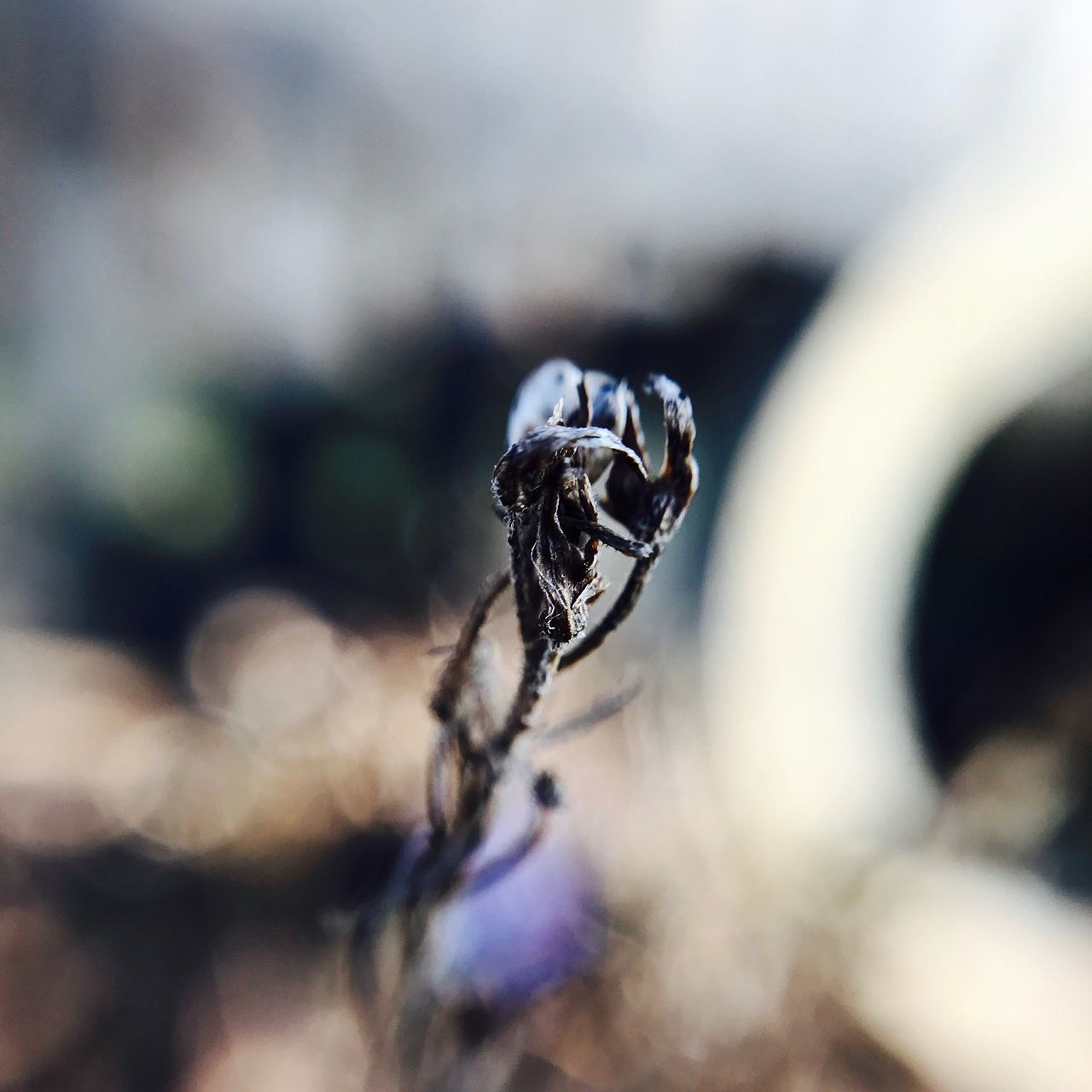 Beauty can be found Everywhere Close-up Nature No People Outdoors Fragility Eye4photography  Flower Beauty In Nature EyeEm Gallery Macro_collection Macro Beauty Macro Photography EyeEm Nature Lover Sweden Nature