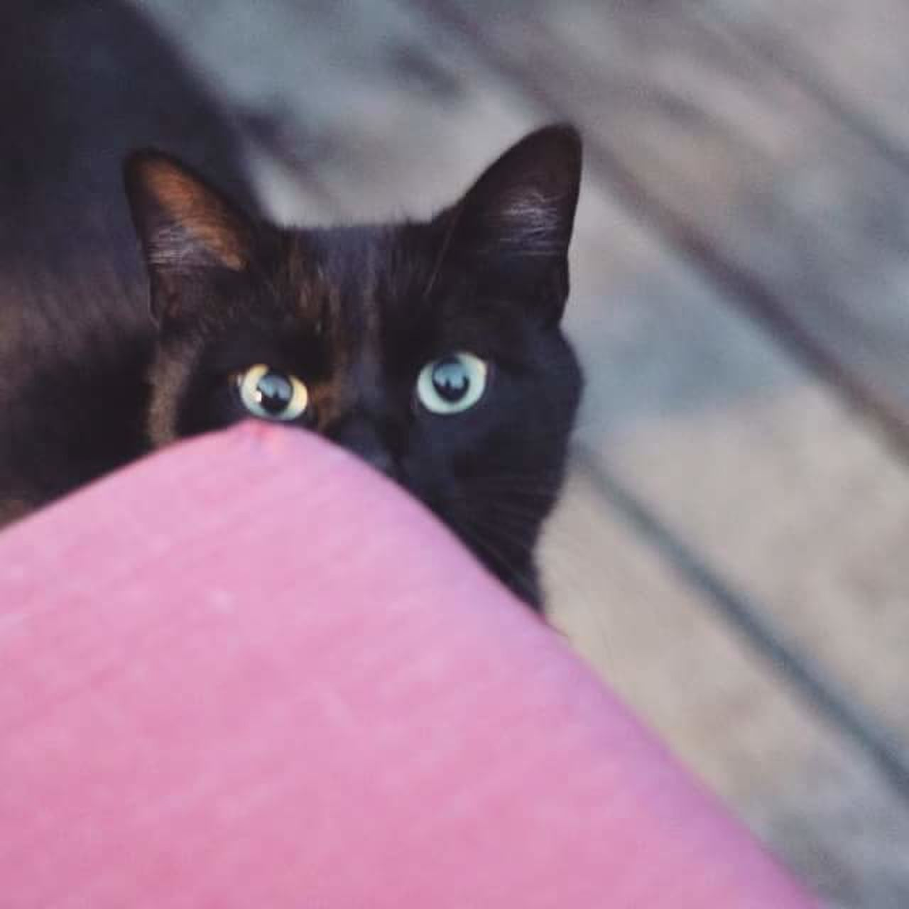 Sailor moon 🌚 Cat Lovers Sailor Moon First Eyeem Photo