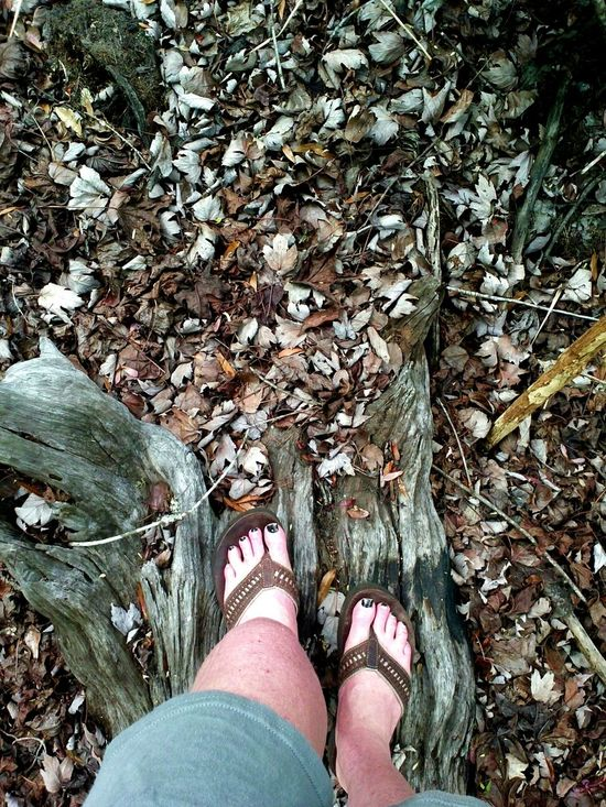 I was standing in the middle of my woods today 3/12/15 Enjoying Life Hello World