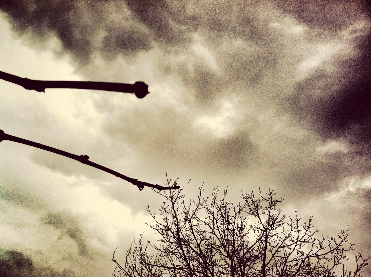 low angle view, sky, cloud - sky, silhouette, no people, day, outdoors, tree, bare tree, nature