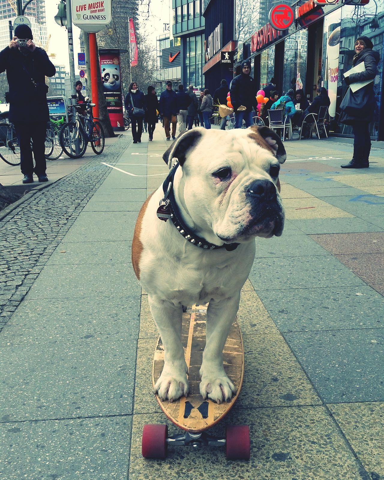 Ein Hund beim skaten sieht man sich nicht alle Tage. Enjoying Life Berlin Open Edit