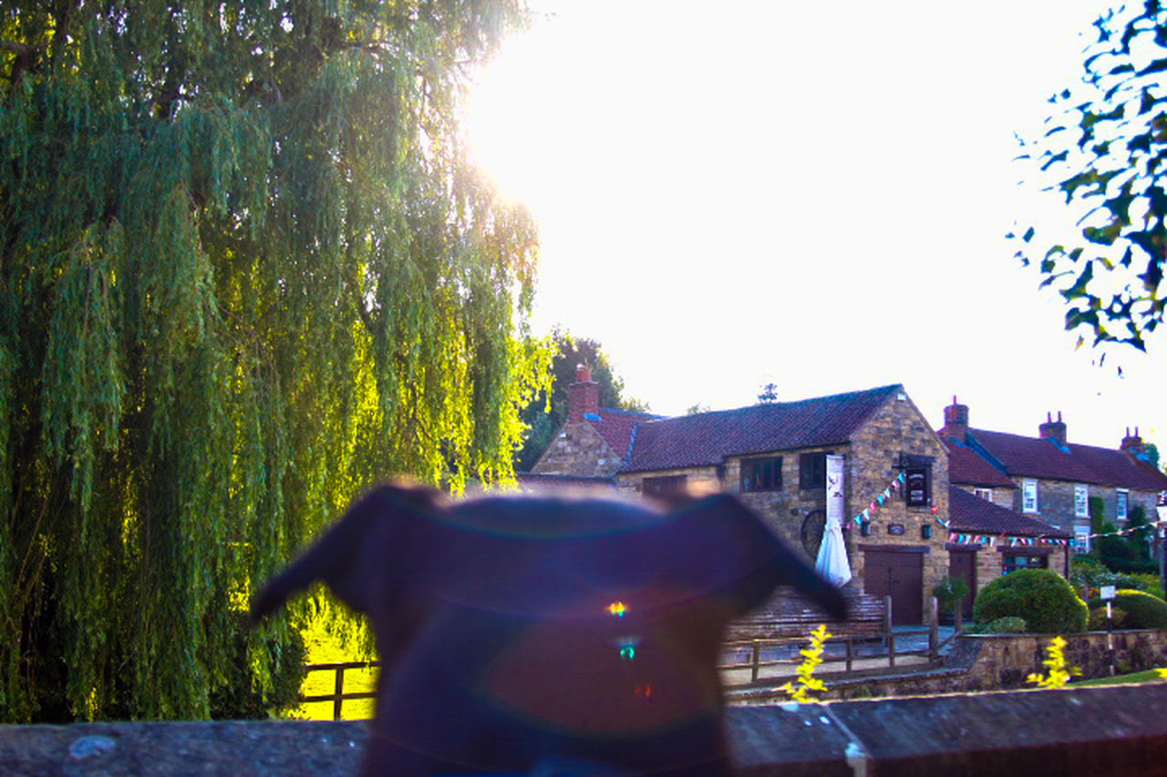 Kilburn Pub Pint Having A Drink Having A Pint Good Times English Pub Garden English Countryside English Pub Sun Sunset Silhouettes Watching Dog Staffordshire Bull Terrier