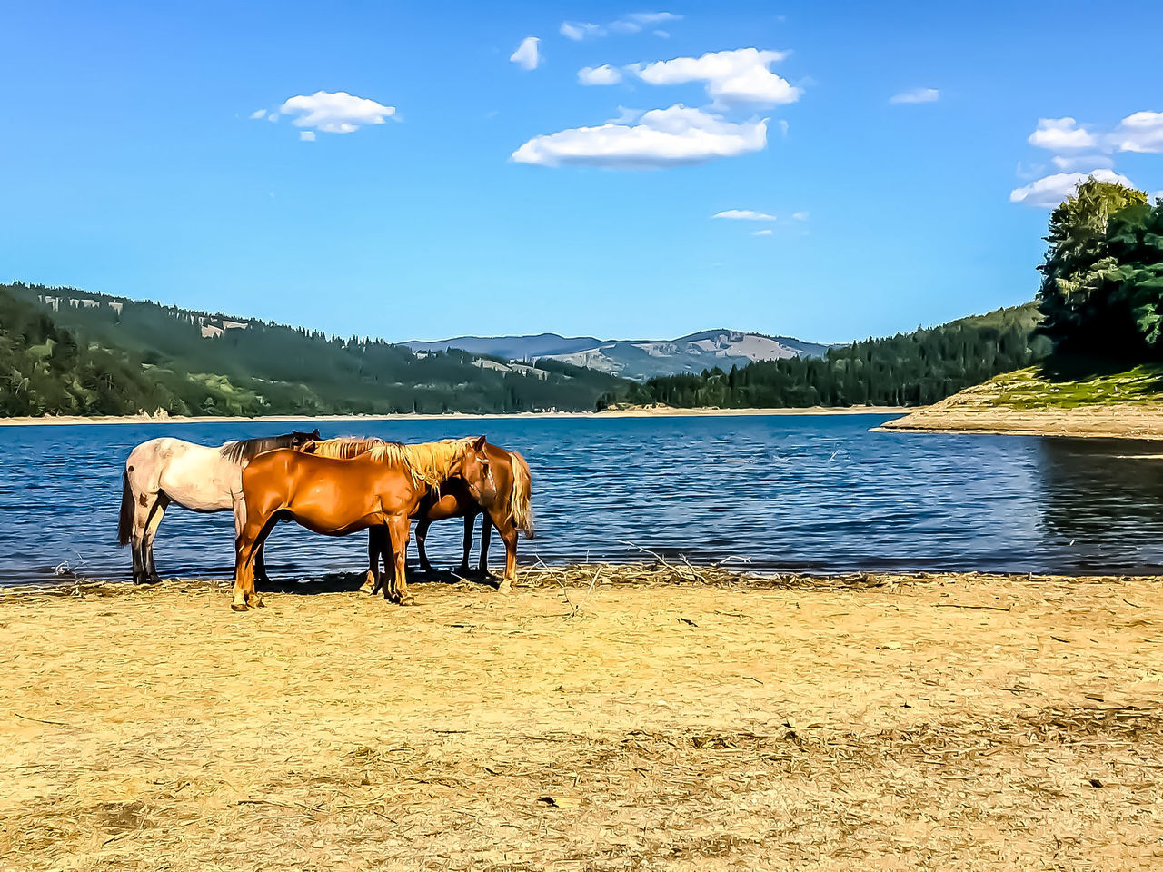 Horses ,nature lake by elvio Animal Sky Mountain Domestic Animals Outdoors The Great Outdoors - 2017 EyeEm Awards Yogainspiration Wallpaper Design Fine Arts Photography Eye Em Nature Lover Art Is Everywhere EyeEm Diversity Magazine Cover Design EyeEmBestPics National Geographic EyeEmNewHere EyeEm Best Edits Nature Artphotography Beauty In Nature Travel Destinations Eyem Best Shots Nature_collection The Great Outdoors - 2017 EyeEm Awards The Great Outdoors - 2017 EyeEm Awards Place Of Heart The Great Outdoors - 2017 EyeEm Awards
