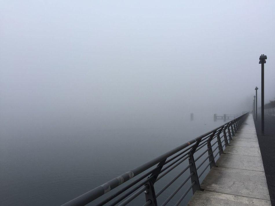 Fog Foggy Foggy Morning Lake Leading Rummelsburg Rummelsburger Bucht Waterside