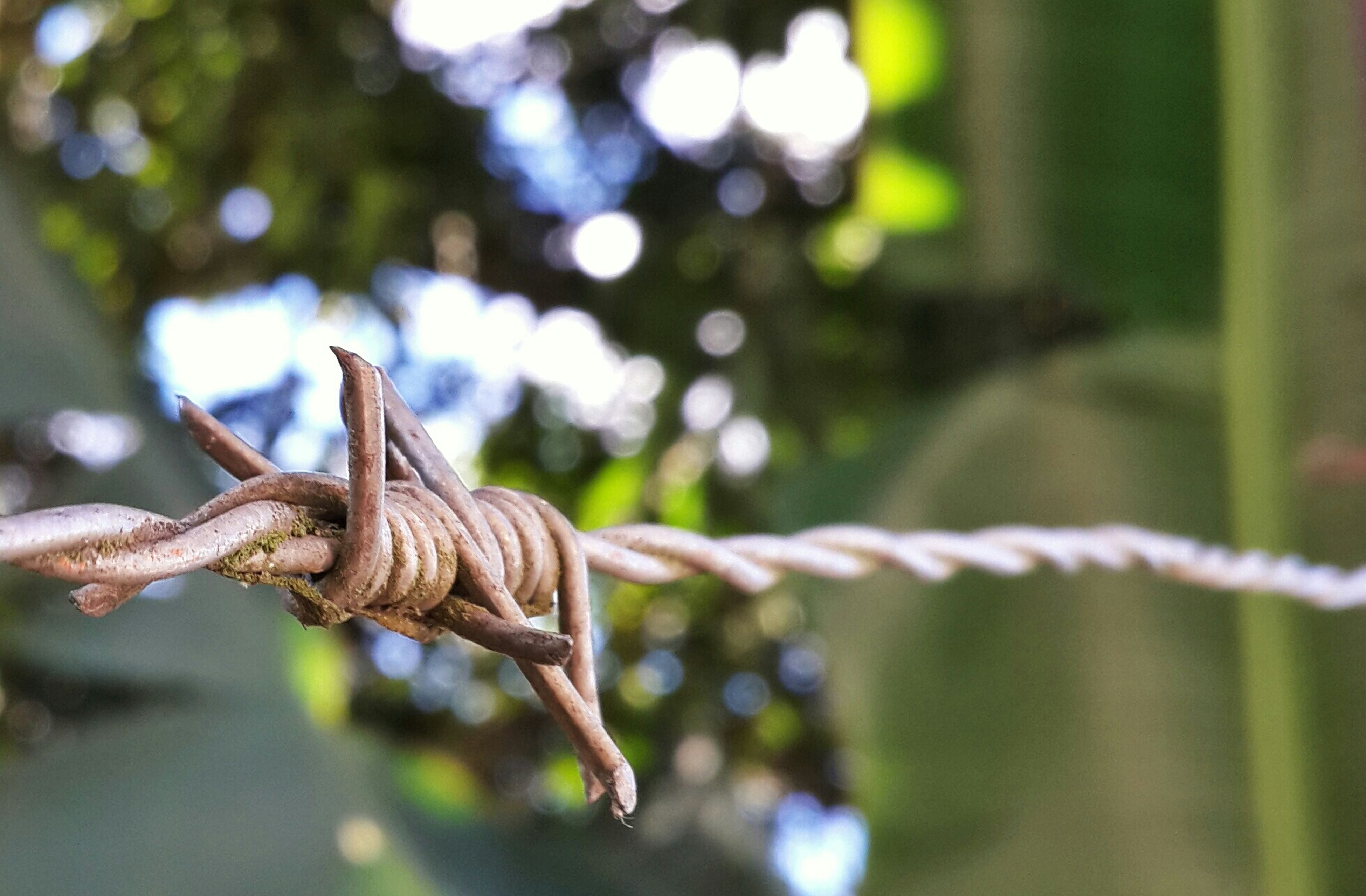 animal themes, focus on foreground, one animal, animals in the wild, wildlife, branch, perching, close-up, bird, tree, selective focus, nature, day, outdoors, full length, side view, no people, twig, fence, wood - material