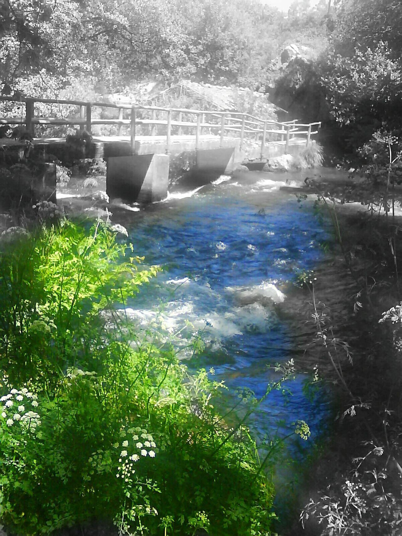 Black And White And Color Galicia, Spain Galicia Coristanco Bosquemagico Bosque Rio