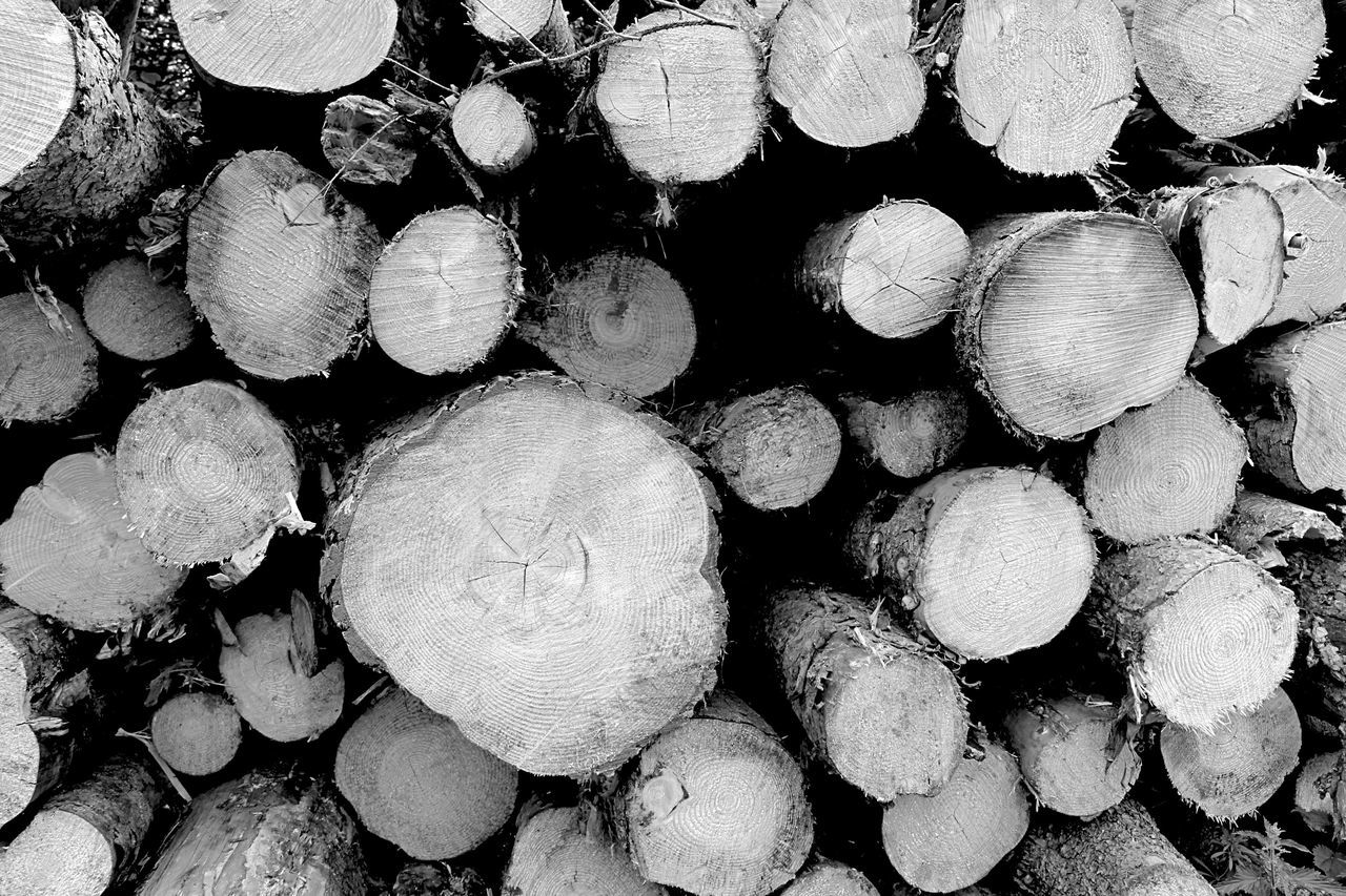 Timber Timber Log Stack Woodpile Full Frame Wood - Material Backgrounds Forestry Industry Heap Large Group Of Objects Lumber Industry Abundance Deforestation No People Close-up Day Outdoors