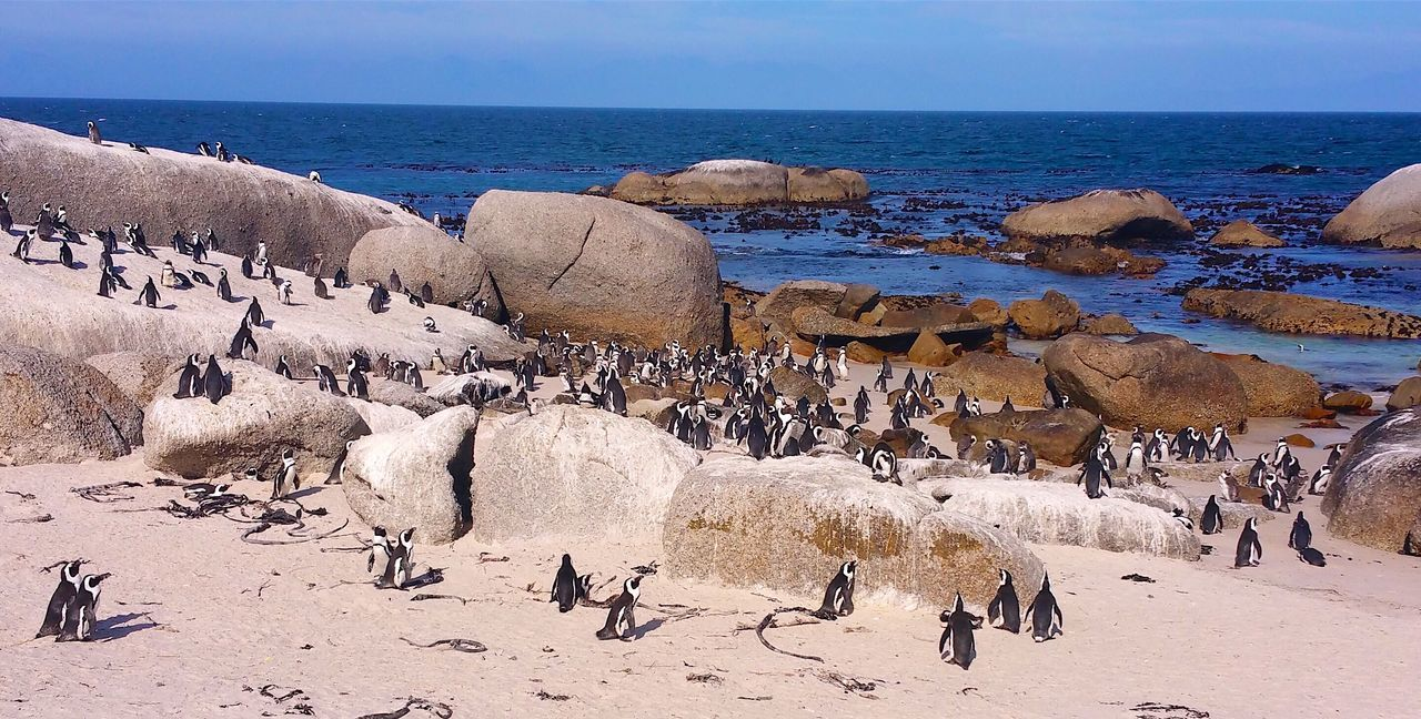 South Africa South African Photography South Africa Seascape Cost Pinguini Penguin Traveling Travel Travel Photography Animals Animal Photography Animal_collection Capture The Moment Captured Moment Capture EyeEm Nature Lover Eye4photography  EyeEm Best Shots