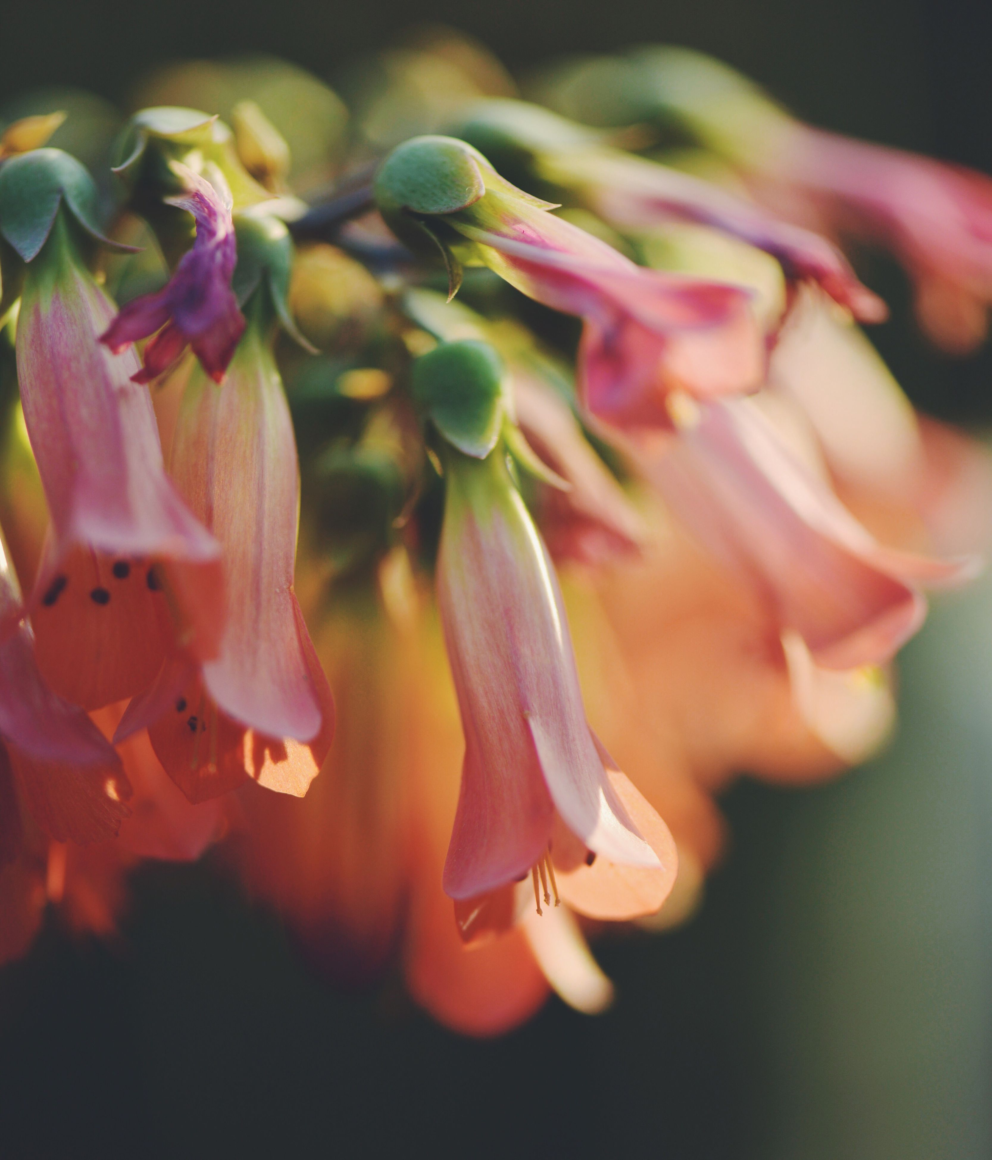 flower, fragility, close-up, growth, beauty in nature, petal, freshness, nature, flower head, plant, no people, day, outdoors