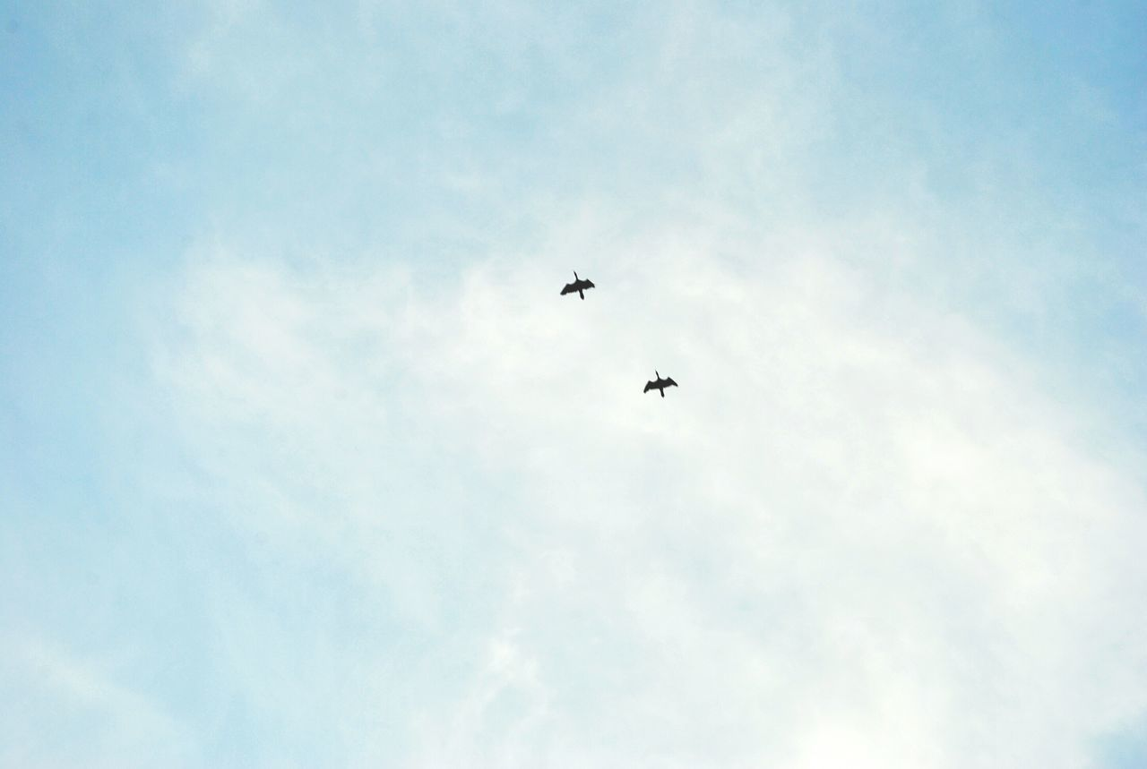 flying, low angle view, sky, bird, mid-air, day, animal themes, animals in the wild, one animal, outdoors, no people, nature