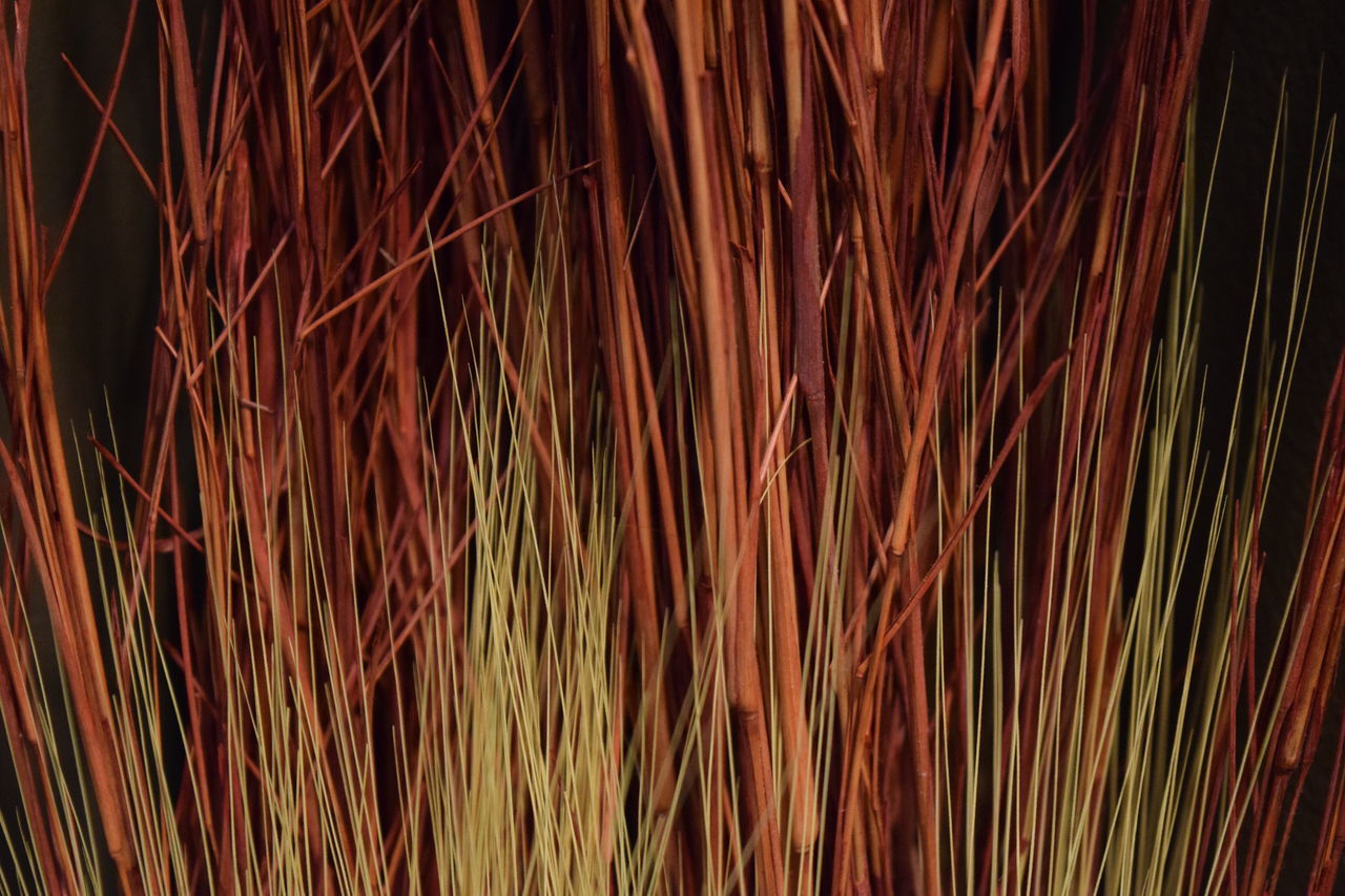 Decorative grass in bedroom Backgrounds Brown Close-up Decorative Grass Dry Grass No People Red Wheat