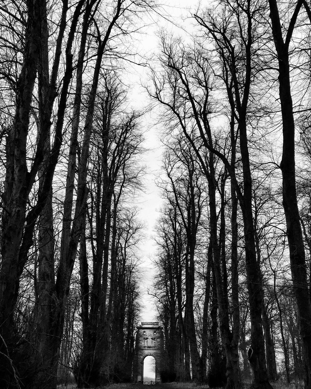 Low Angle View Of Bare Trees At Forest