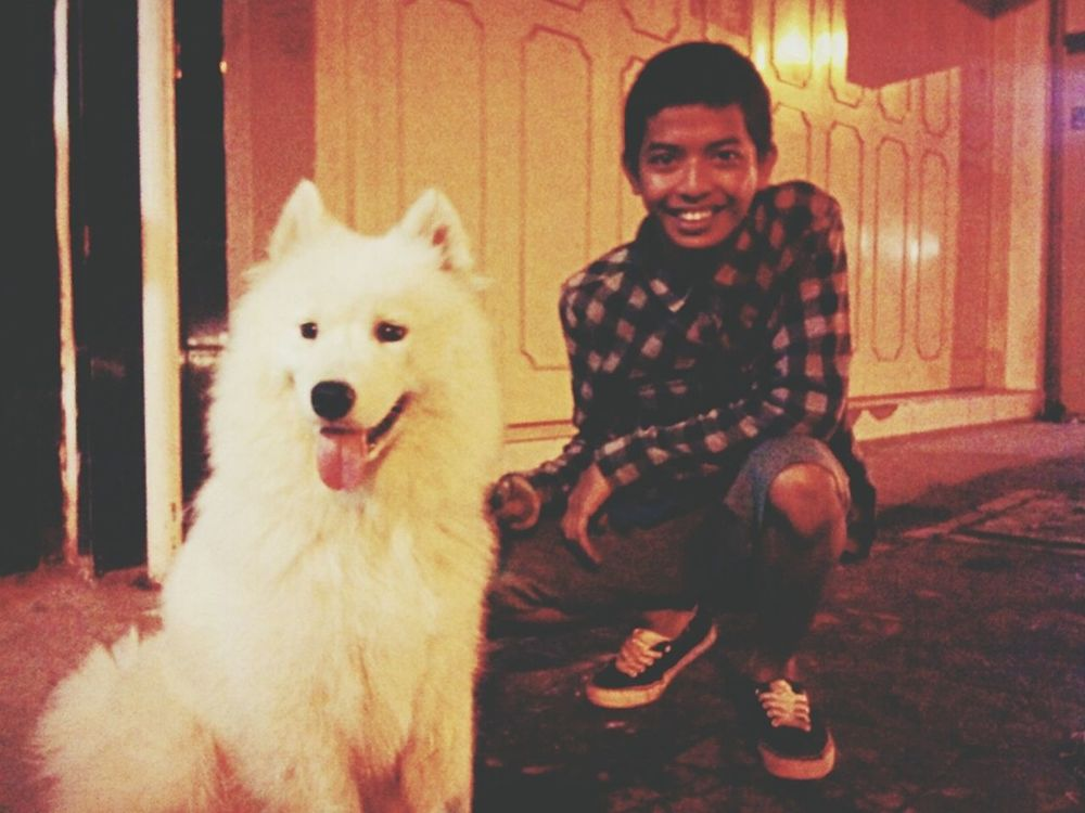 My Dog Is Cooler Than Your Kid. Clearing My Head With A Late Night Jog. jog White Pet Samoyed