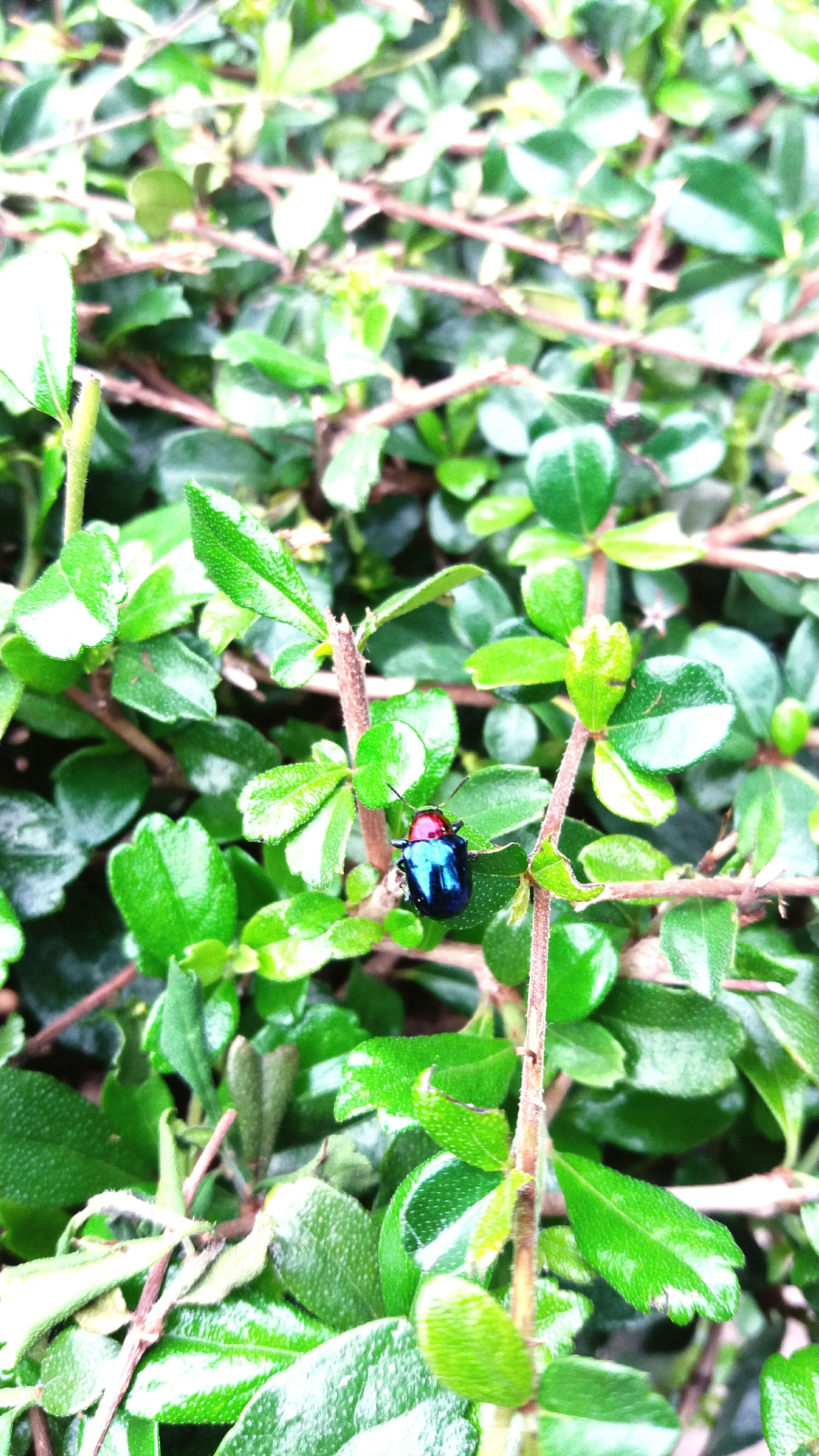 insect, growth, animal themes, leaf, nature, animals in the wild, one animal, green color, plant, beauty in nature, outdoors, day, no people, close-up, freshness