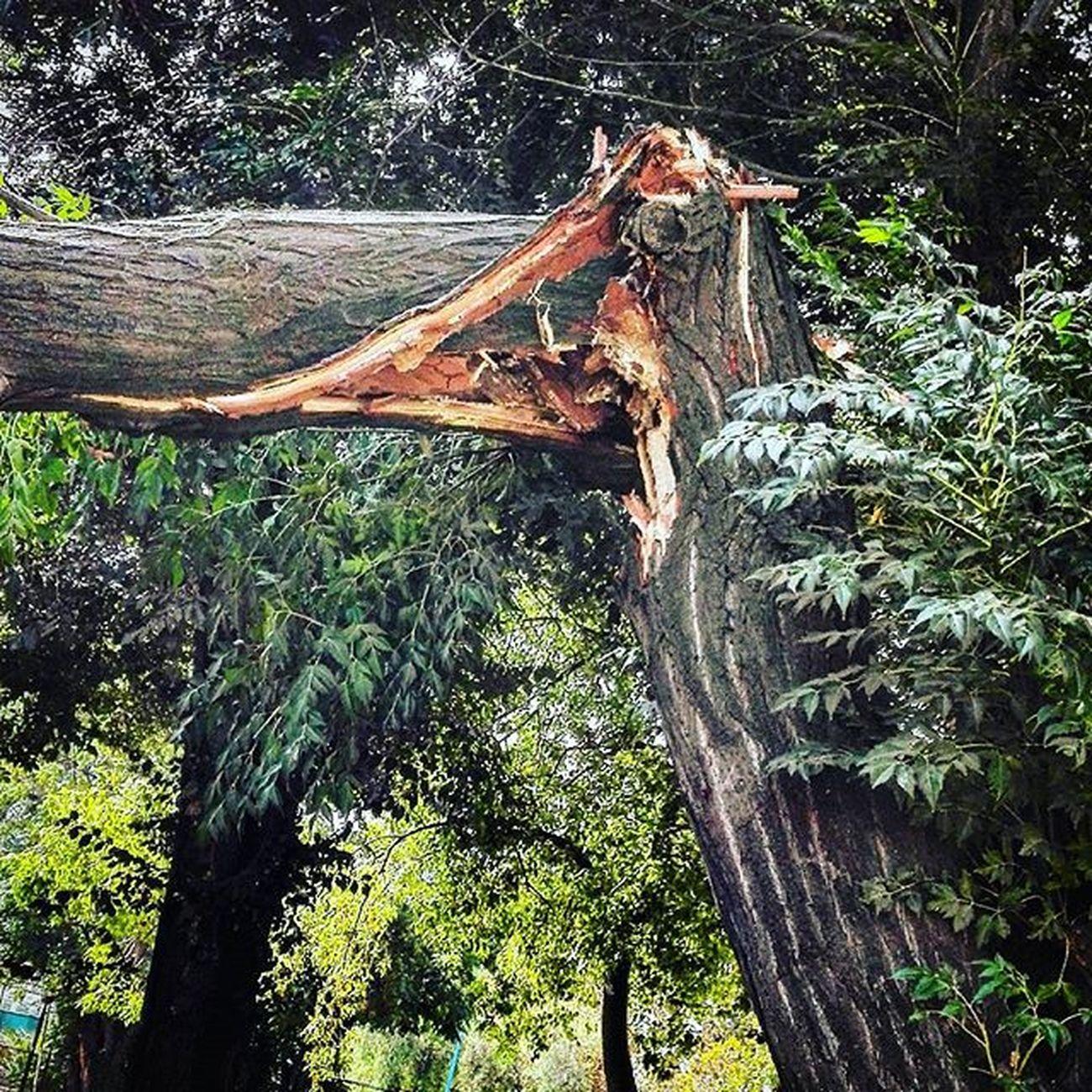 No aguanta el y quieren que aguante yo Sinaguante Trhee árbol Quiebre