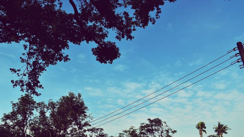 Tree Sky Nature Outdoors Clouds Lines Wires Blue Silhouette Scenery View