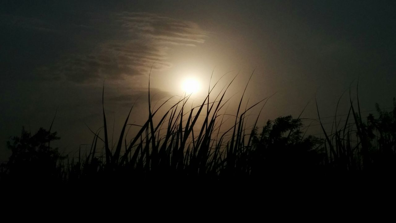 The Following I follow the Sunsets all around . i love to click sunset in different views and in different manners . Sun Sunset Beautiful Nature Sunset_through_grass Looking_sunset_from_the_fields_ofsugarcane The Great Outdoors - 2016 EyeEm Awards Nature's Diversities Nexus_5 Showcase June