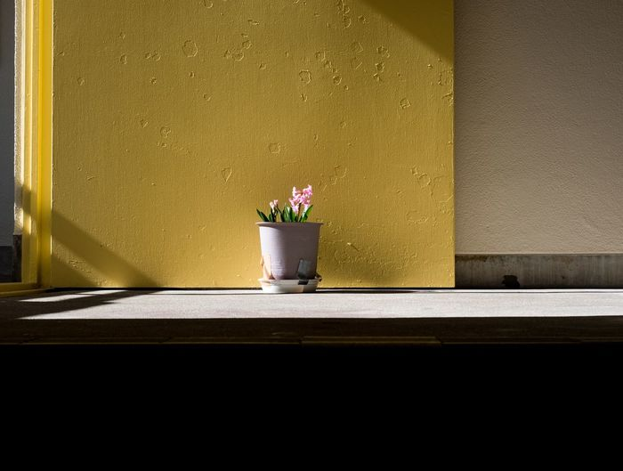 Tokyo Flower Yellow Potted Plant Growth Plant No People Indoors  Architecture Day Nature Flower Head Freshness Shades Of Winter EyeEmNewHere The Graphic City Colour Your Horizn