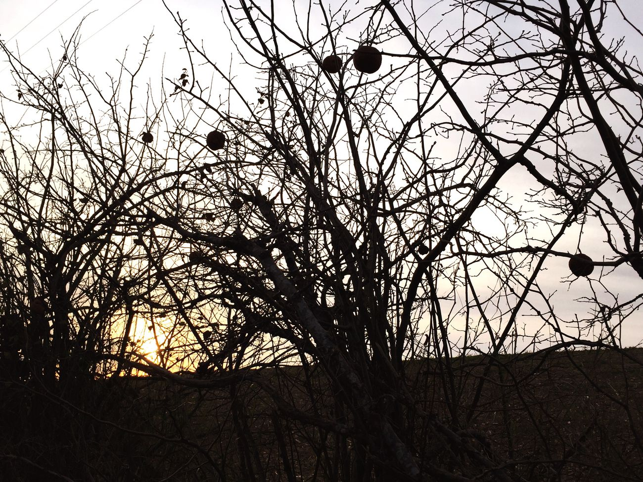 Nostalgia 🌾✨ Melancholic Landscapes Melancholy Sunset Tree Branches Sun Landscape Landscape_photography Nature Nature Photography EyeEm Nature Lover EyeEm Best Shots - Nature