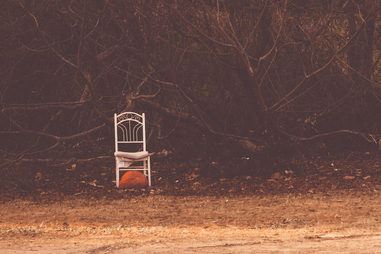 Beautiful stock photos of pumpkin, Abandoned, Chair, Day, Forest