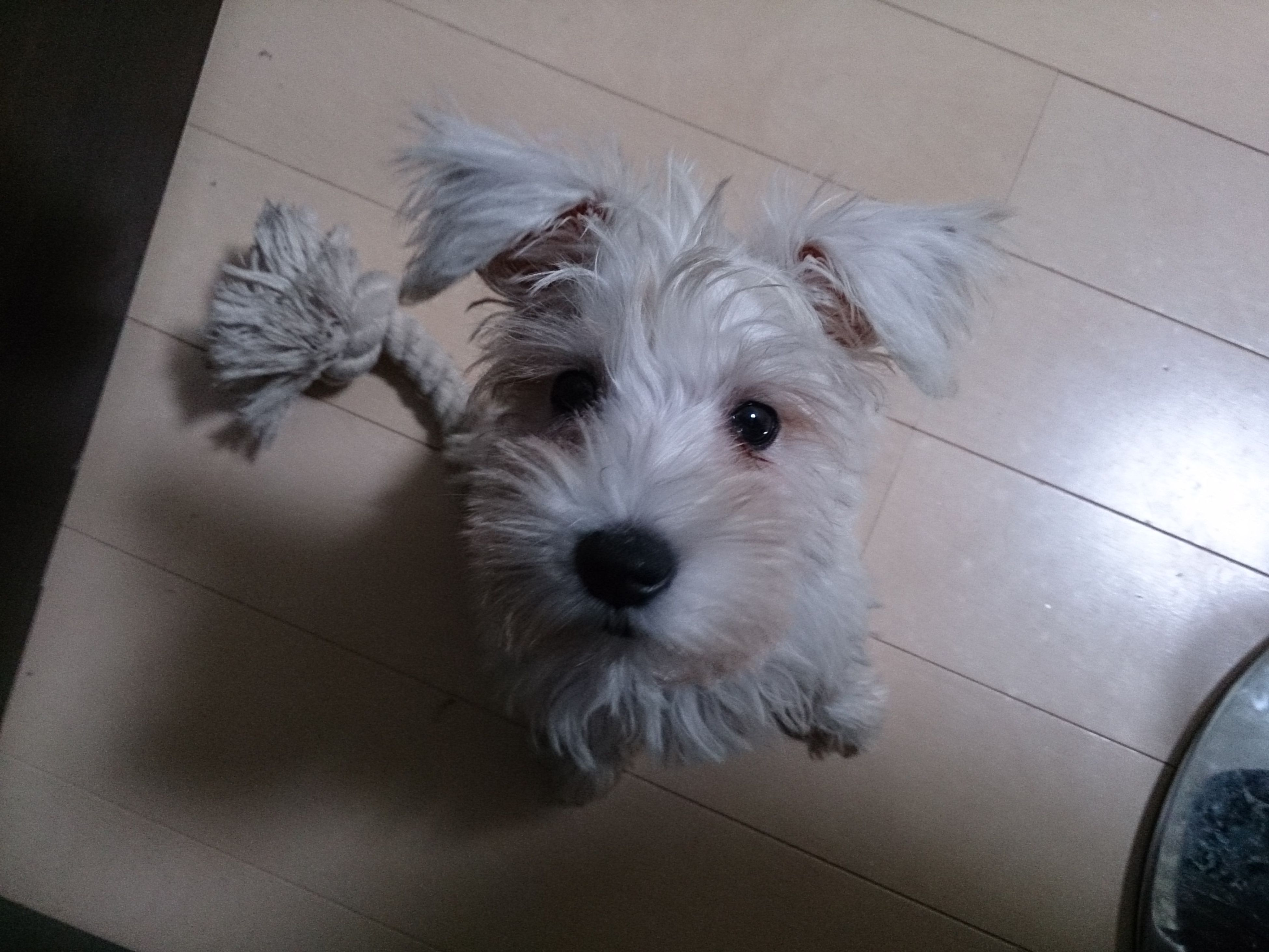 pets, domestic animals, one animal, animal themes, indoors, dog, looking at camera, portrait, mammal, white color, high angle view, close-up, no people, flooring, animal head, tiled floor, alertness, home interior, cute, front view