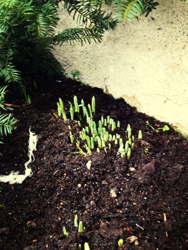 Summer Vibes TulipsSpring Flowers Flowers,Plants & Garden