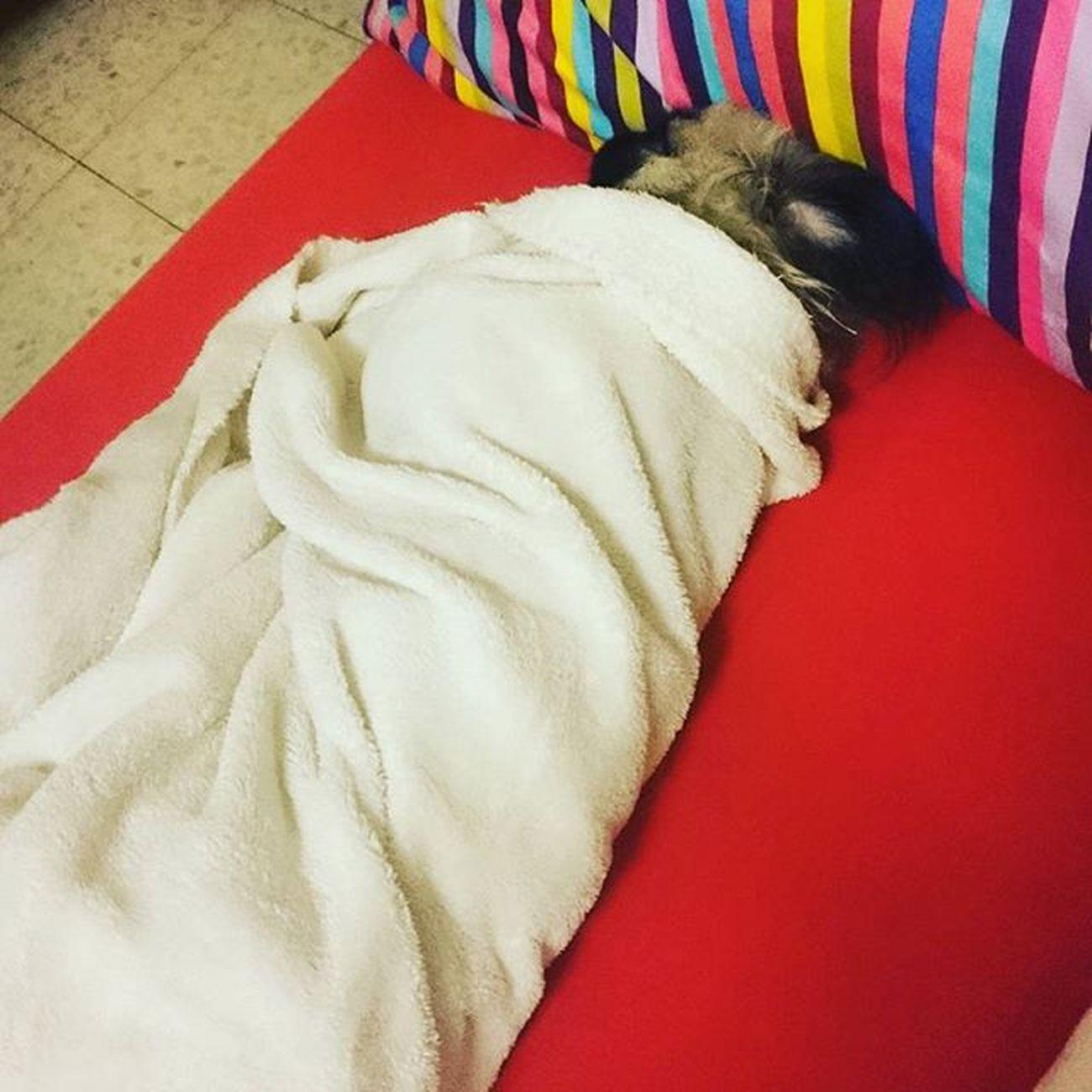 לילה טוב, 😉 לונה שמנה אוהבתאותה