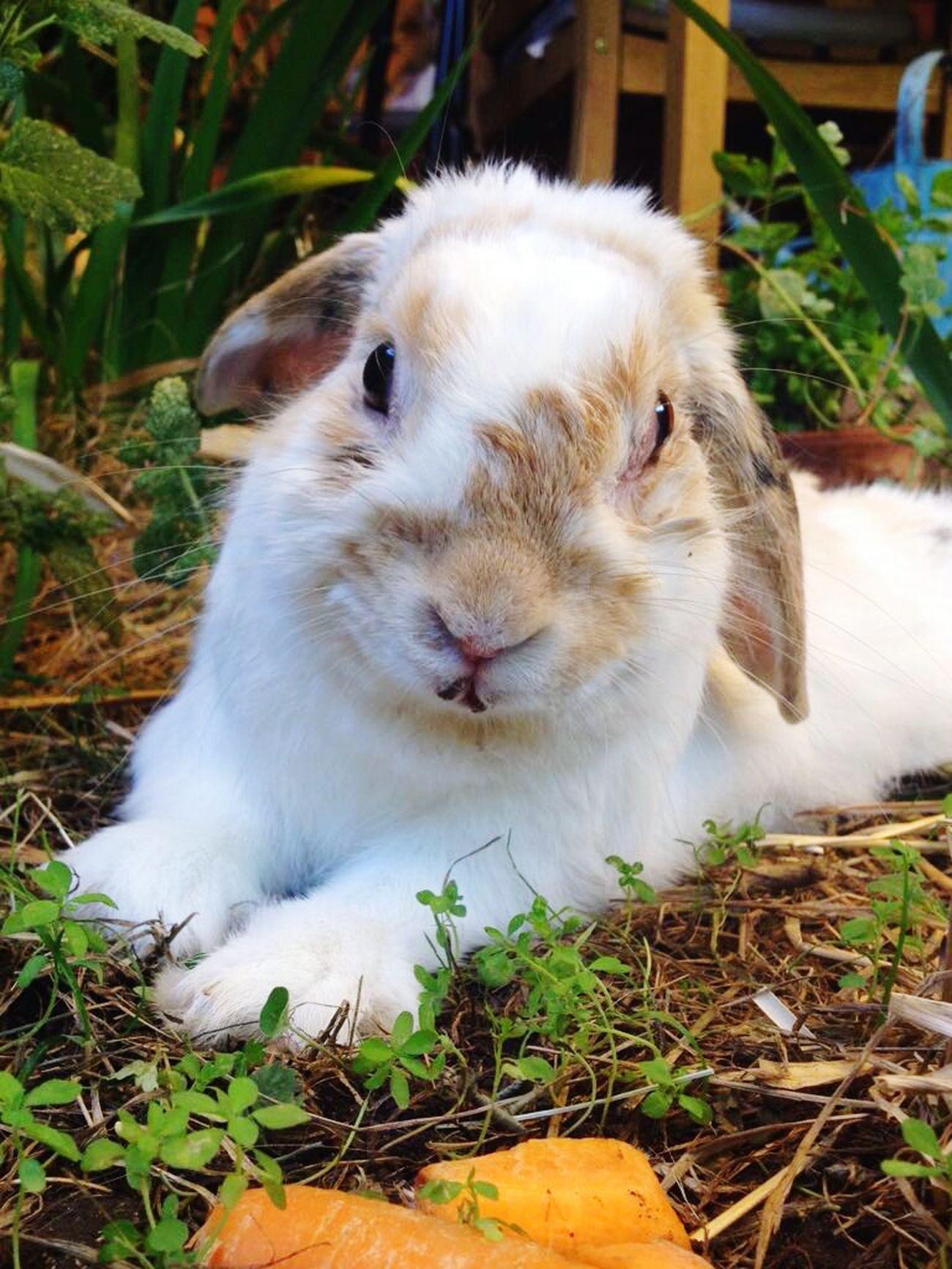 Rabit Rabbit ❤️ Popular Photos