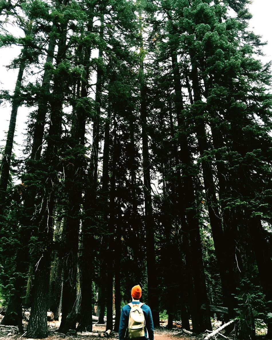 Check This Out Portland Fall Travel Trees Oregon Pacific Northwest  Traveling Adventure Vscocam Portrait PNW Crater Lake Camping Pdx Boyfriend Love Lovers And Friends Waterfall Hiking