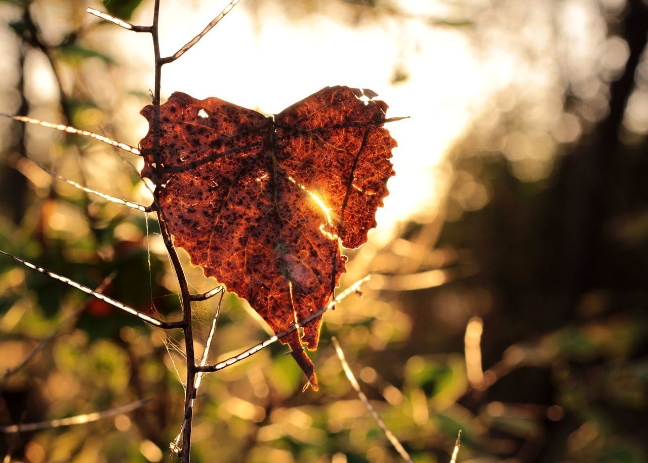 Don't lose heart. Nature Leaf Beauty In Nature Sunlight EyeEm Best Shots EyeEm Taking Photos Tranquil Scene Heart Getting Inspired November