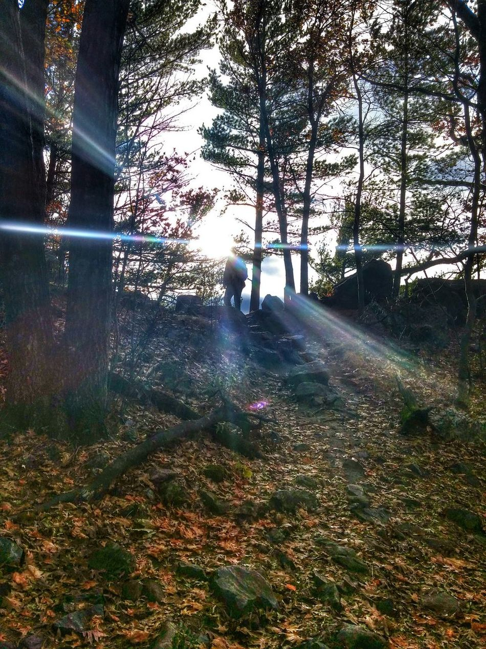 Hikingadventures Devilslake  Wisconsin Awesome Amazing Sunbeams Sunshine Beautiful Silhouette Nature Outdoors Forest Trees Likeit Loveit Photography Follow4follow Commentbelow