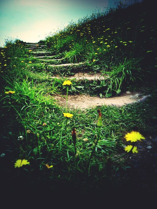 Freshness Grass Flower Path In Nature Pathway Path To Nowhere Pathway To Heaven Stairway To Heaven Nature Walkup Walk Up Walk To The Top Walk To The Sky Hilltop Hillclimb Climbing Stairs Climbing Up Climbing A Mountain Way To Heaven Walkway Walking Trail Trekking Walk To The Light Bright Future