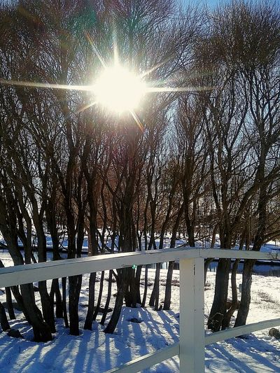 Sunshiningthoughthetrees Sunshining Light And Shadow Bridge Arch Inthepark Sunny Day Nature Photography Sun Shining Through Springtime Park