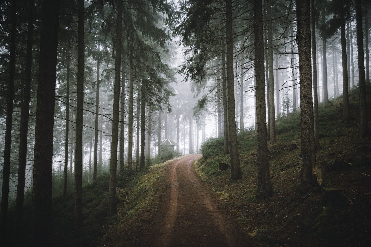 Beautiful stock photos of germany, Beauty In Nature, Day, Dirt Road, Fog