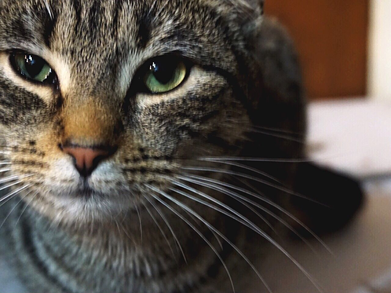 Cats hate me Domestic Cat Animal Themes Feline Pets Whisker Cat Cats Close-up Portrait Domestic Animals Mammal Looking At Camera Indoors  No People Pet Animals Green Green Color Green Eyes Beautiful Life Beauty Lifestyles