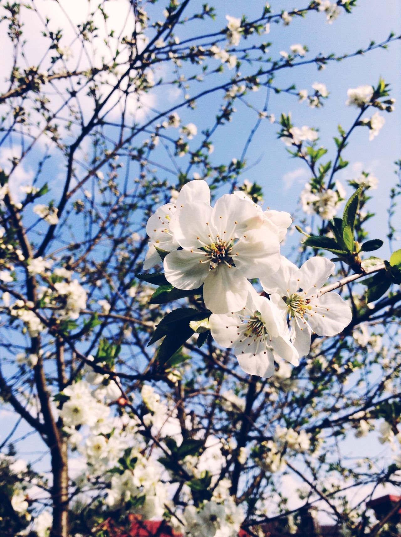 Flowers Plum Garden