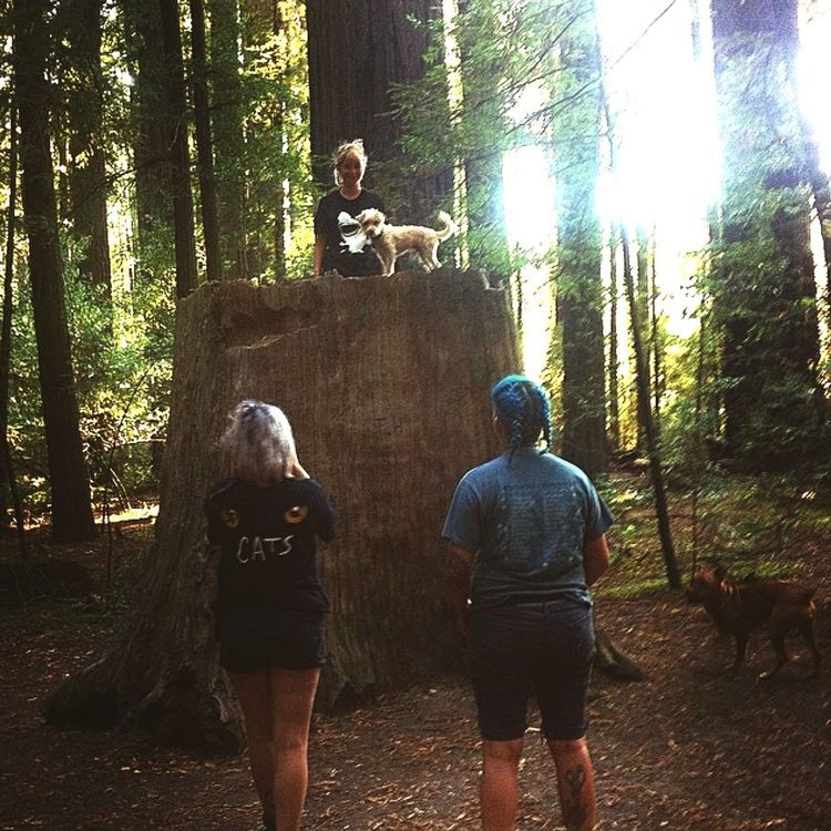 Forest Tree Leisure Activity Lifestyles WoodLand Casual Clothing Full Length Tourism Tourist Tree Trunk Togetherness Vacations Hiking Friendship Looking Non-urban Scene Redwoods California Keoki Travel Norcal Exploration Young Adult Day