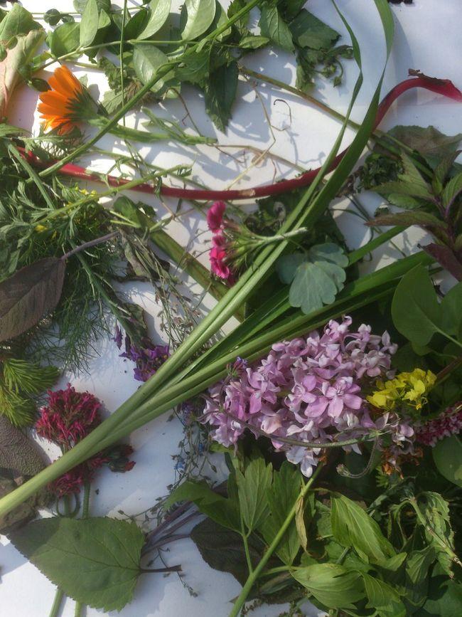 Free Sunday Still Life NEM Still Life Flowers,Plants & Garden Workshop Meeting Networking Working The Purist (no Edit, No Filter) NEM Painterly