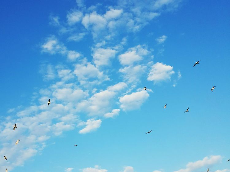 Martılar Istanbuldaysam Göğebakmadurağı Gökyüzü Mavi Sen