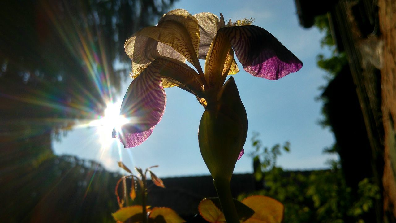 no people, sunlight, nature, growth, flower, sun, low angle view, focus on foreground, outdoors, close-up, plant, day, beauty in nature, fragility, sky, freshness
