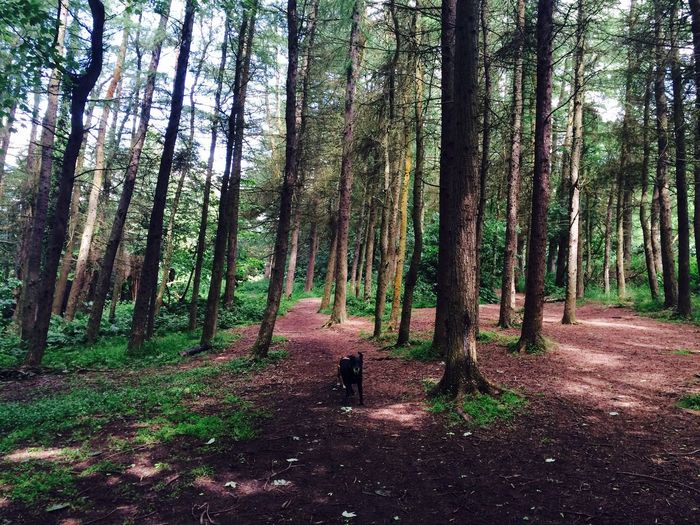 Running dog through the woods