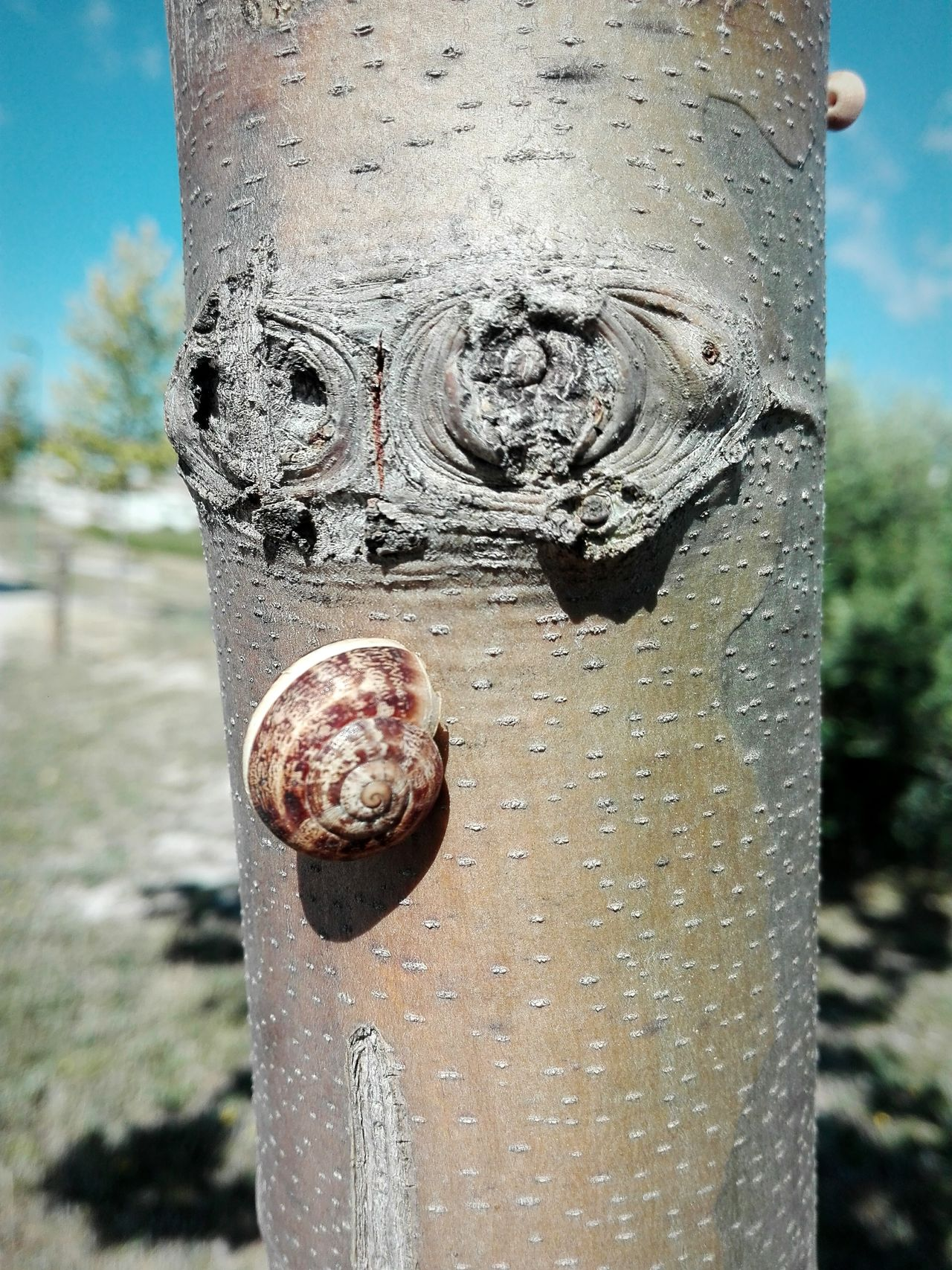 Tronco Caracol Arbre árbol Animals In The Wild Snail🐌 Snail Tree