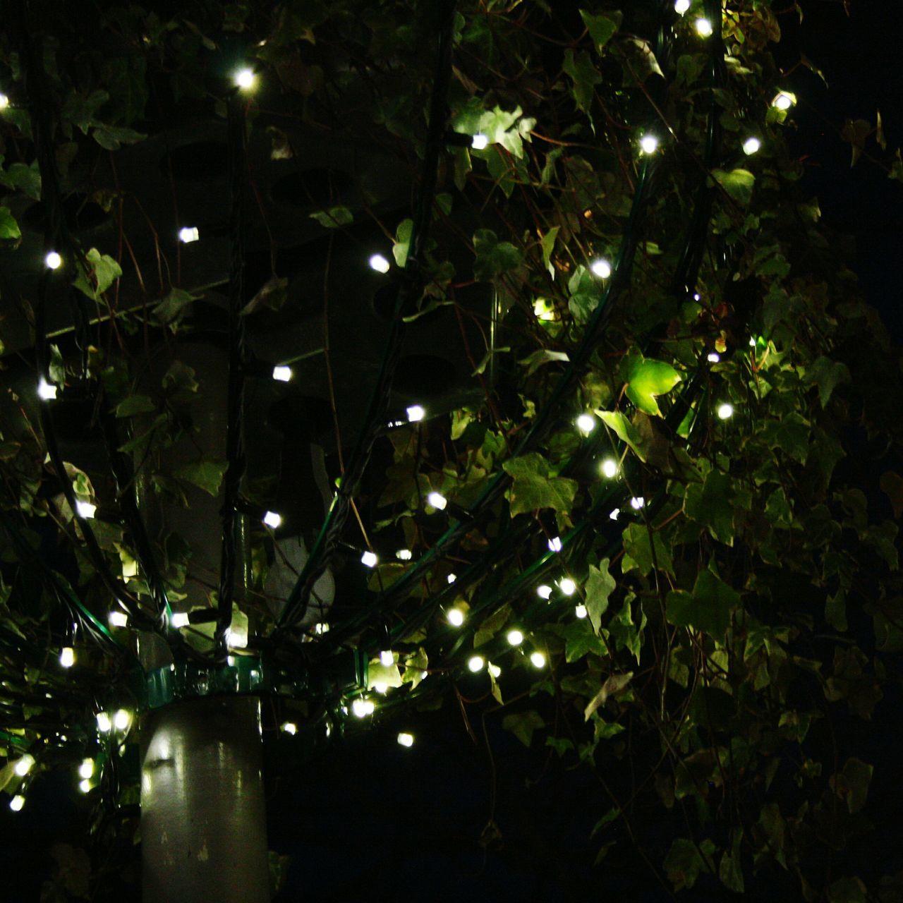 illuminated, night, no people, growth, tree, outdoors, leaf, nature, close-up